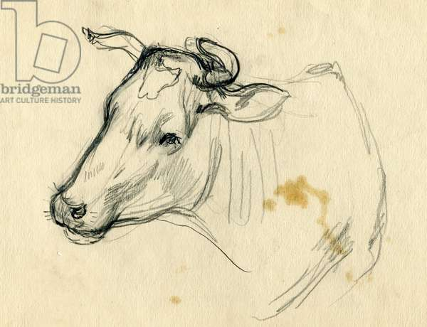 Cow, 1940s (pencil on paper)