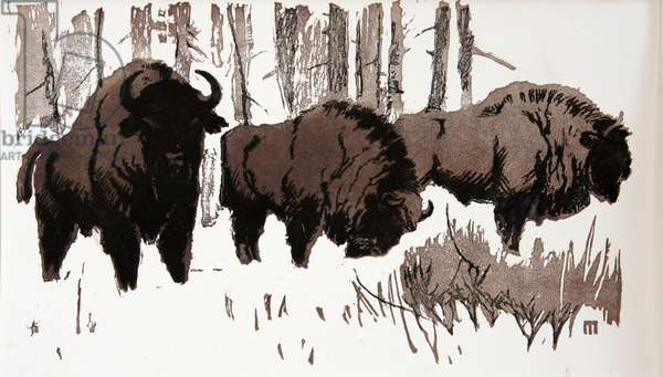 Bisons in the Snow, 1955 (linocut)