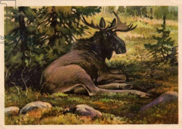 Elk, 1954 (litho)