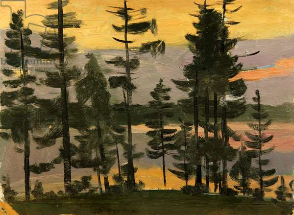 Pine Trees in the Evening Sun, 1962 (oil on card)