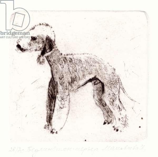 Bedlington Terrier, 1994 (drypoint)