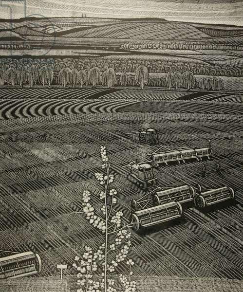 Earth, 1981 (linocut)
