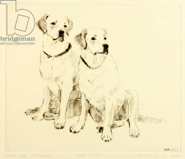 Two Labradors, 2007 (drypoint)