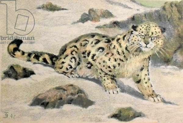 Snow leopard, 1941 (colour litho)