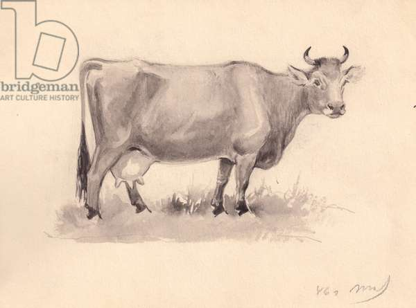 Cow, 1946 (w/c on paper)