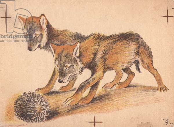 Foxes Chasing a Hedgehog, 1940 (colour litho)