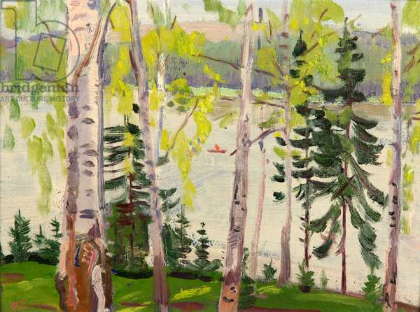 Birch Trees by Lake, 1968 (oil on card)