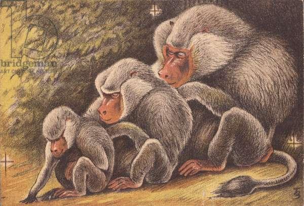 Baboons, 1948 (litho)