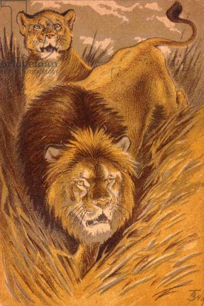Lion, 1940 (litho)