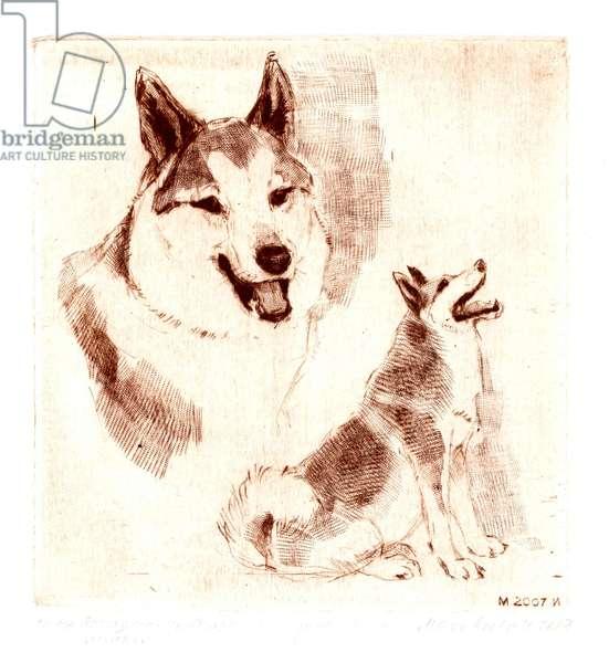 West-Siberian Husky, 2007 (drypoint)