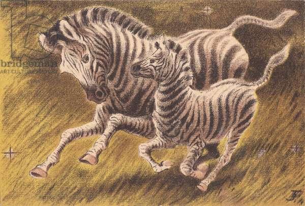 Zebras, 1948 (colour litho)