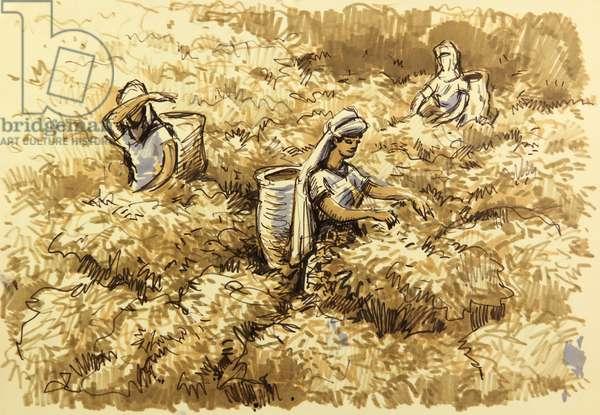 Tea Pickers in Ceylon, c.1960 (pen on paper)