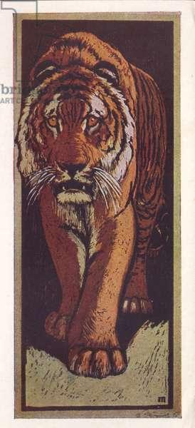 Tiger, 1958 (litho)