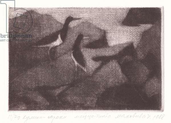 Oystercatchers (Haematopodidae), 1987 (mezzotint)