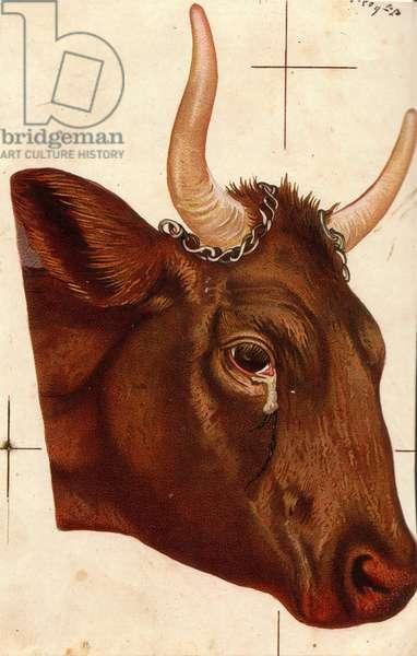 Cow, 1900s (colour litho)