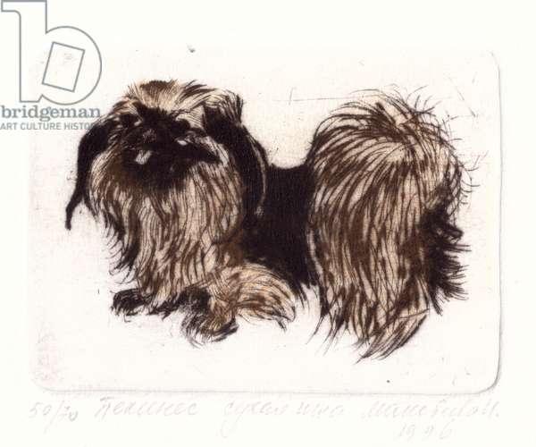 Pekinese Dog, 1994 (drypoint)