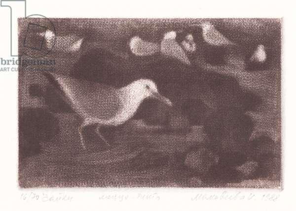 Gulls (Larus), 1987 (mezzotint)