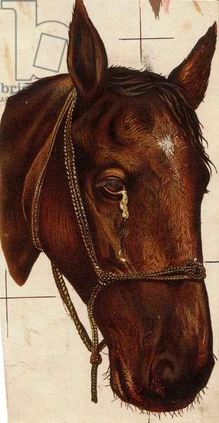 Horse, 1900s (colour litho)