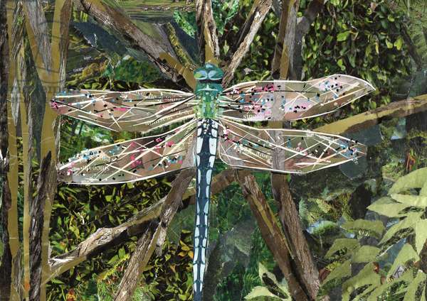 Turquoise Dragonfly