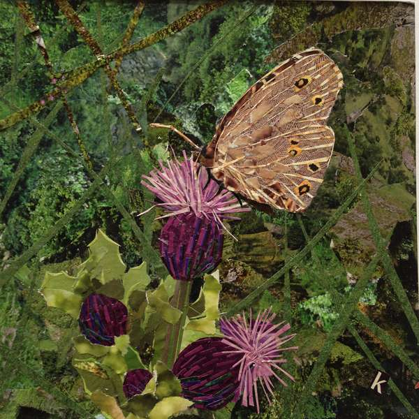 Flit - Satyr Butterfly On Thistle