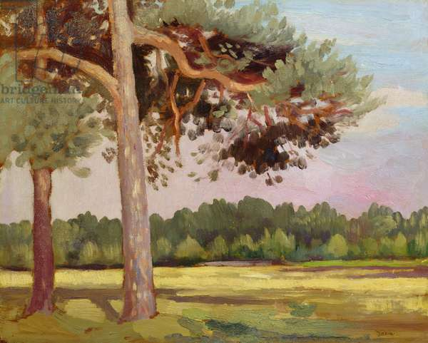 Landscape with Fir Trees (oil on board)
