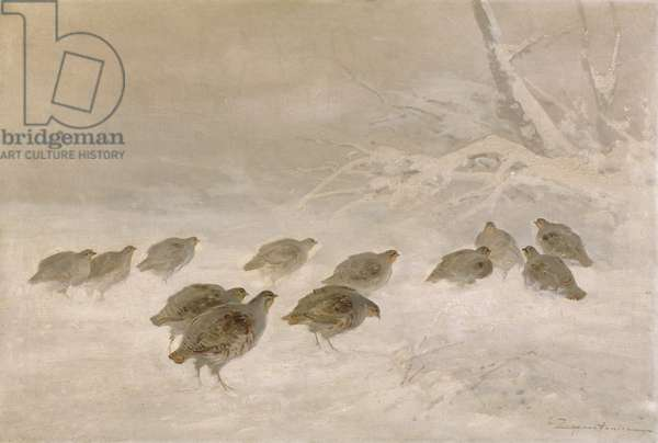 Partridges in the Snow, c.1930 (oil on canvas)