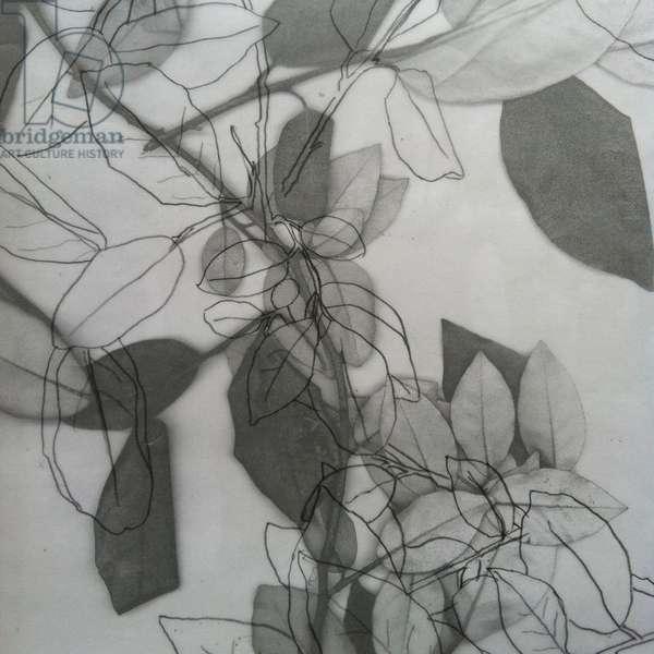 Botanical, 2014, (digital)