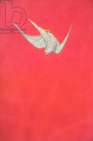 Pink Swoop; Gyr Falcon