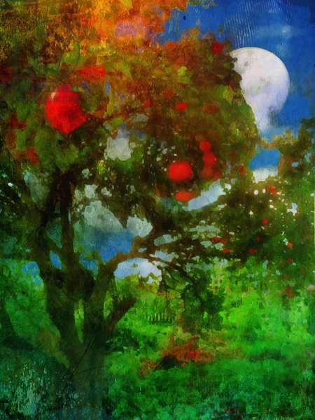 orchard in moonlight
