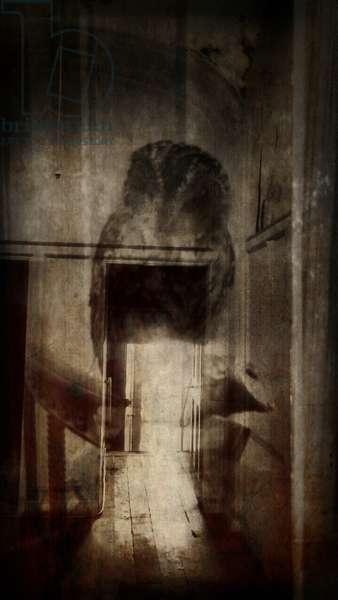 'Beauty is a witch' series Elvaston Castle..'owl reflecting doorway'