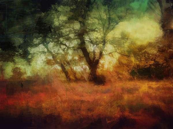 woods at Calke Abbey