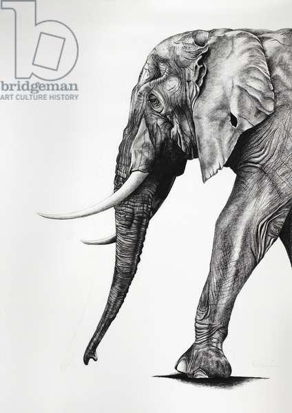 Masai gentleman, 2012, (Charcoal on paper)