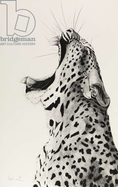 Leopard Yawning, 2008, (Charcoal on paper)