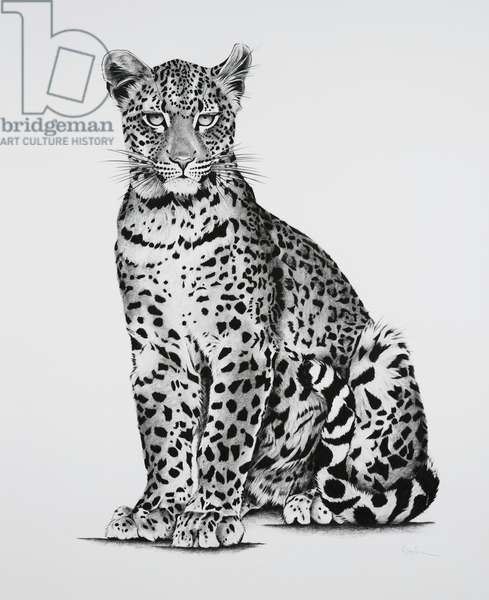 Young Leopard, 2018, (charcoal on paper)