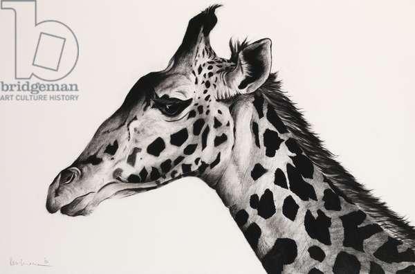 Giraffe II, 2006, (Charcoal on paper)