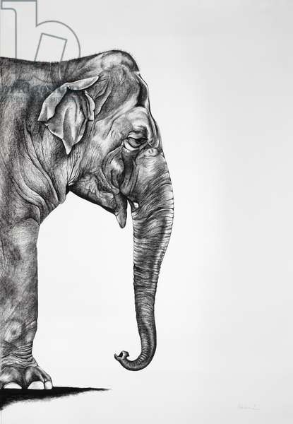 Indian, 2012, (Charcoal on paper)