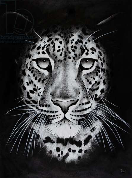 Night leopard, 2018, (charcoal on paper)