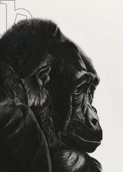 Contemplating, 2008, (charcoal on paper)