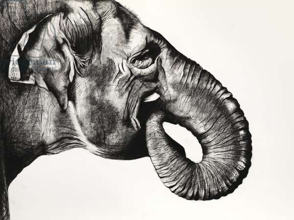 Indian Shadows, 2012, (Charcoal on paper)