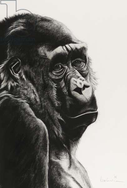 Link, 2008, (charcoal on paper)