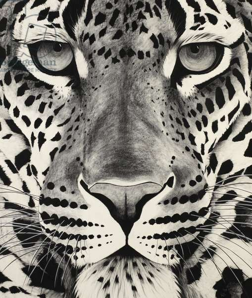 Large leopard face, 2009, (Charcoal on paper)