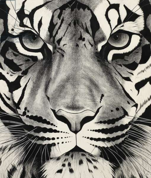 Large tiger face, 2006, (Charcoal on paper)