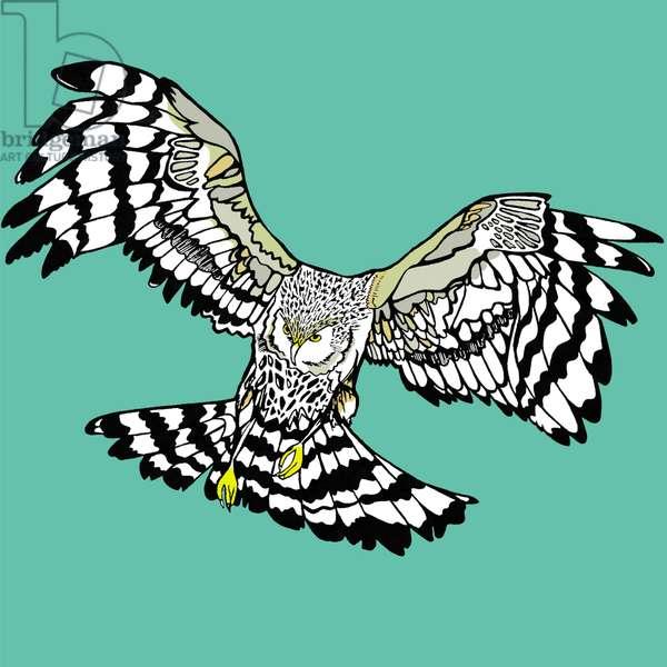 Hettie Hen Harrier, pen and ink, digitally coloured