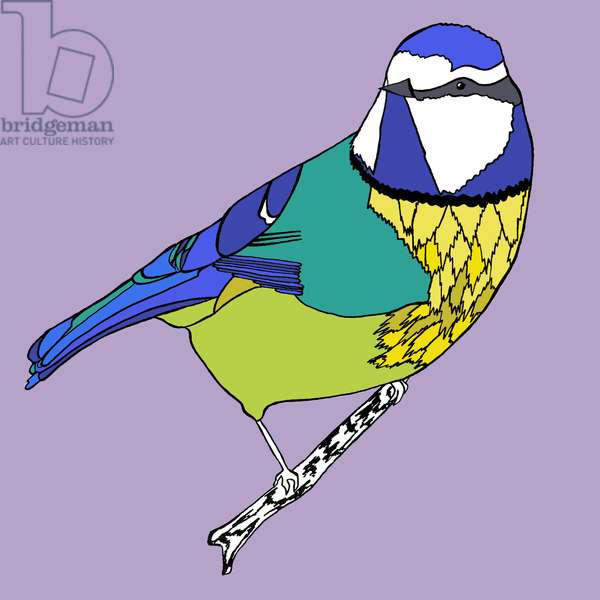 Betty Blue Tit, pen and ink, digitally coloured
