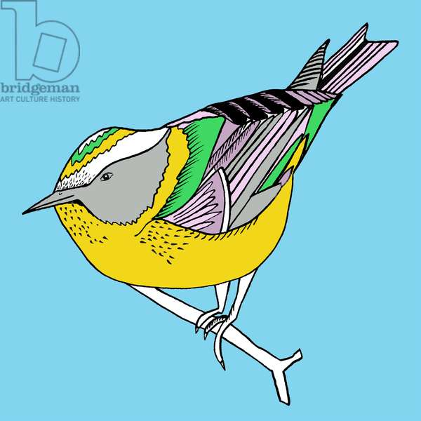 Florence Firecrest, pen and ink, digitally coloured