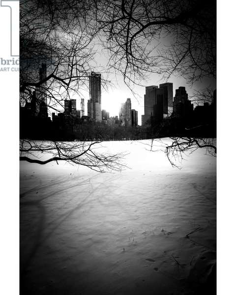 Central Park City & Trees Nº1