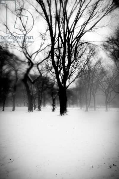 Dark Central Park Tree