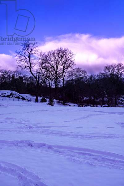 Purple Central Park Winter Nº2