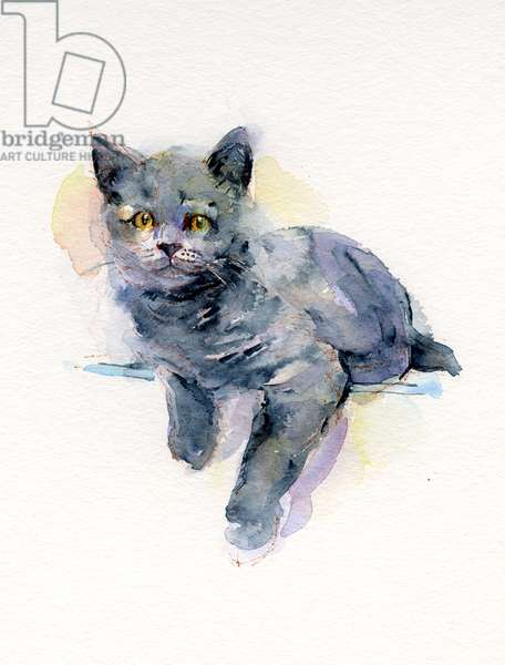 Grey kitten, 2017, (watercolor)