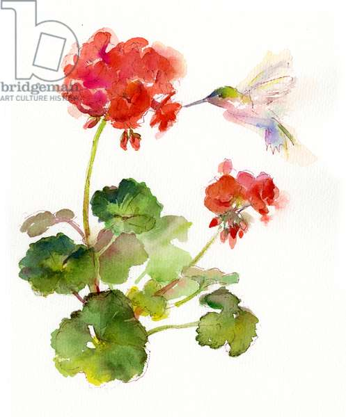 Hummingbird with Geranium, 2015, (watercolor)